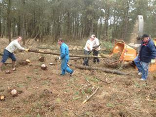 Week-end abattage des arbres